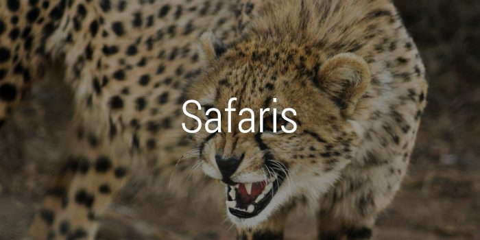 safaris-700x350